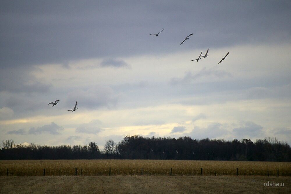 Migrating Cranes 2 by rdshaw