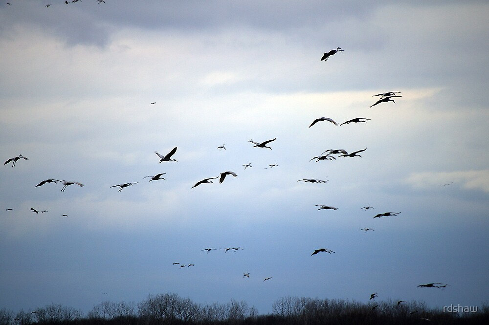 Migrating Cranes 4 by rdshaw