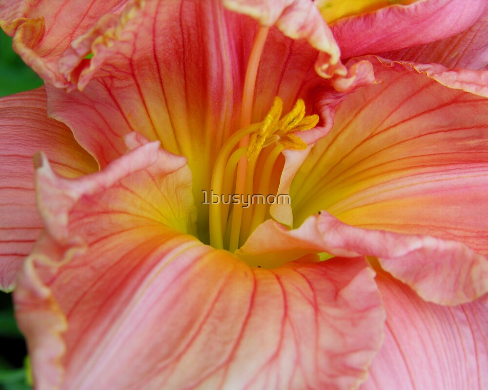 pretty pink lily by 1busymom