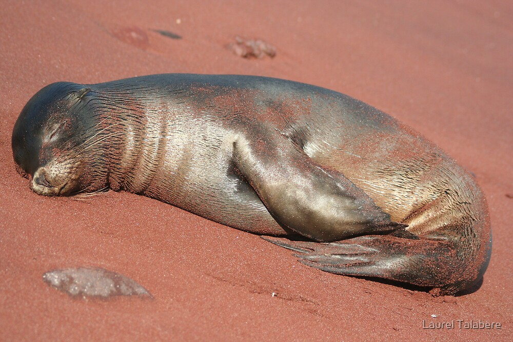Napping on the Beach by Laurel Talabere
