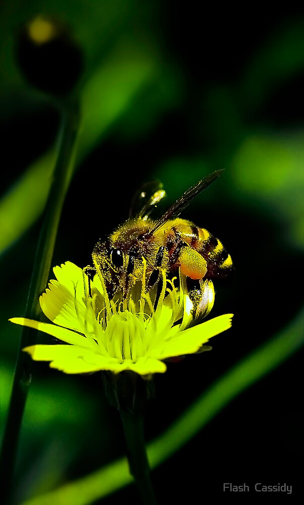 Flower Eating a Bee by Flash  Cassidy