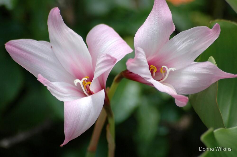 Rain Lilies by Donna Adamski
