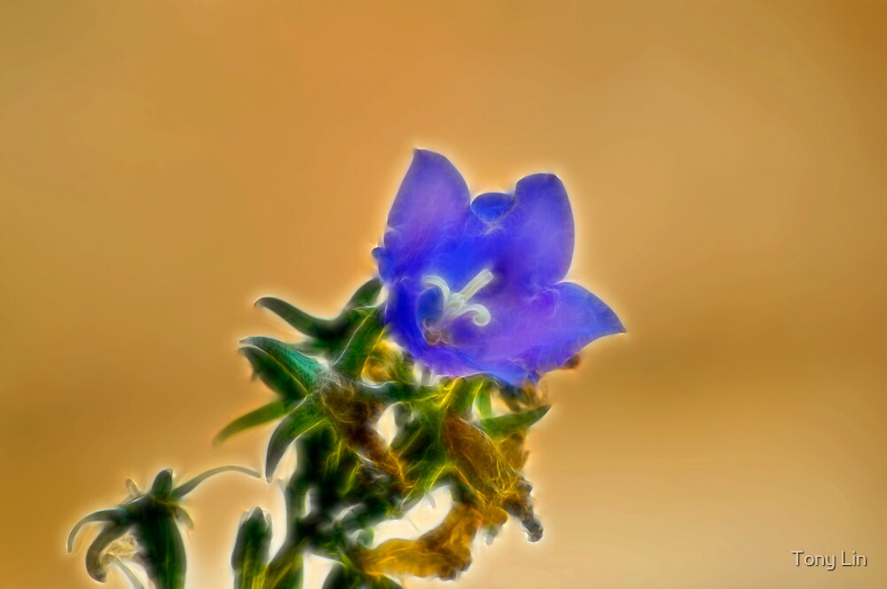 Fantasy Flower by Tony Lin