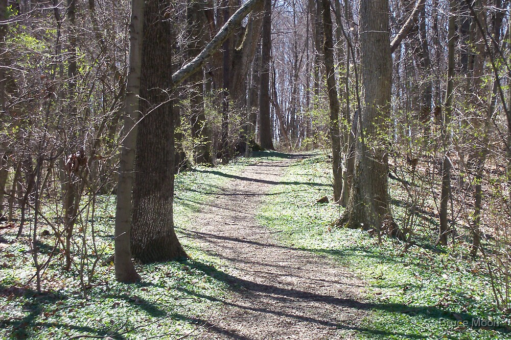 Nature's Path Spring by Bruce Moon