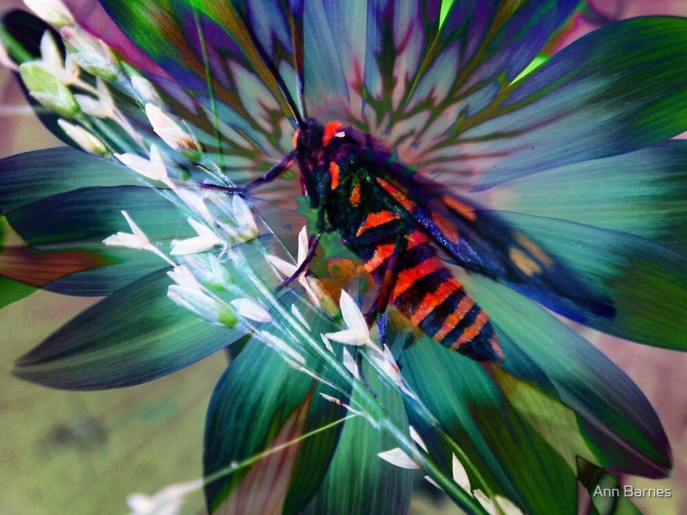 Butterfly Art #5 by Ann Barnes