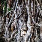 The Buddha Head - Thailand by Kathy Weaver