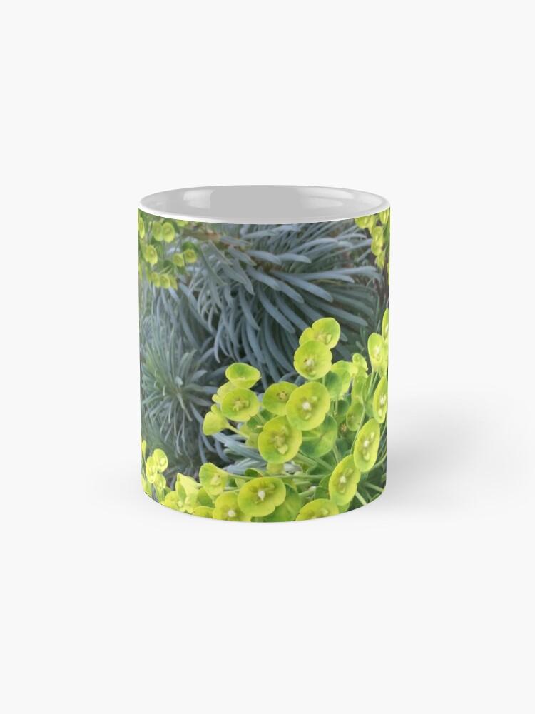 Alternative Ansicht von Euphorbia Tassen