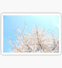Blue sky and cherry blossoms in full bloom Sticker