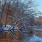 Reflections of Winter by Lanis Rossi