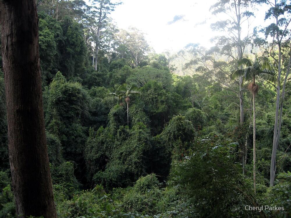 Australian Rainforest by Cheryl Parkes