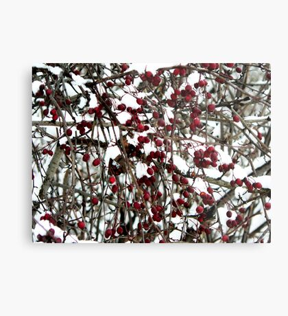 Birds' winter food Metal Print