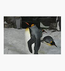 King Penguin Photographic Print