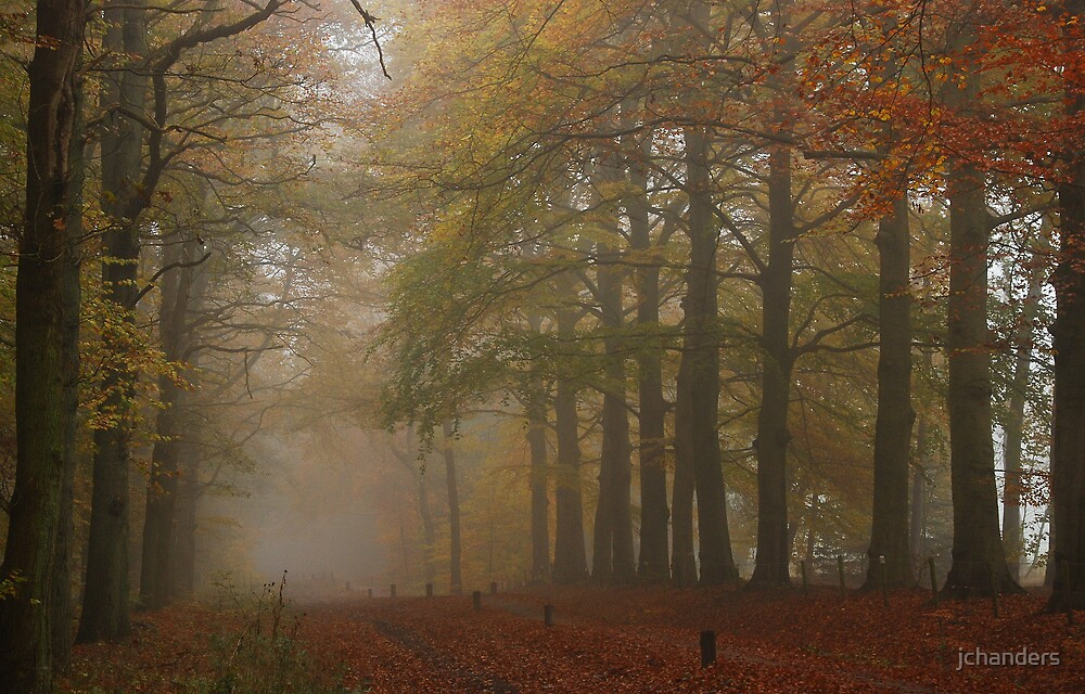 Back to the misty forest lanes by jchanders