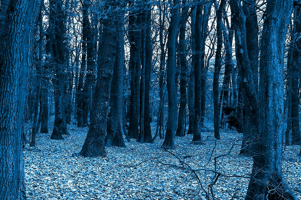 in a blue woods  by anisja