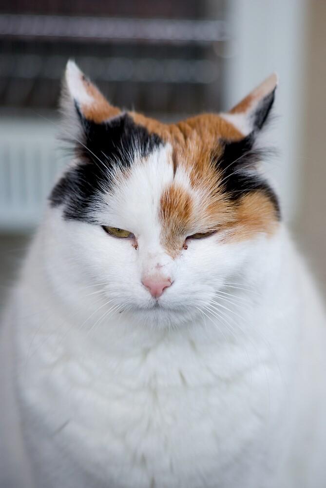 I'm Not Grumpy by howieb101