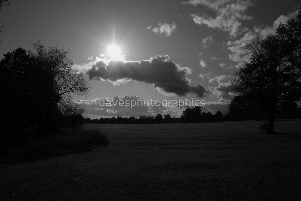 Sunny Day by davesphotographics