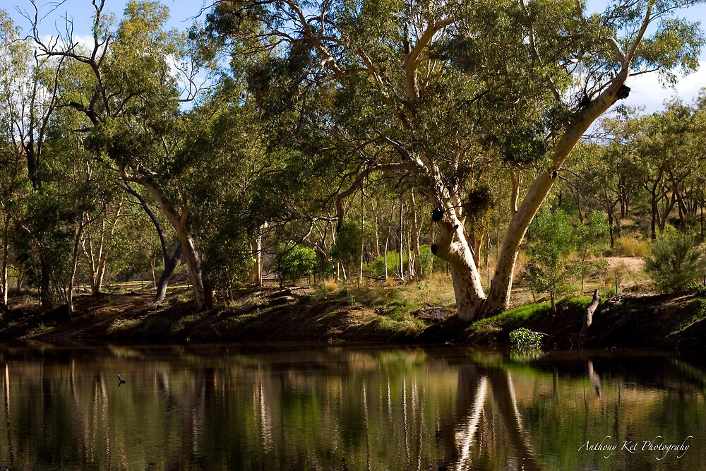 Greenery in Ormiston Gorge by Anthony  Ket