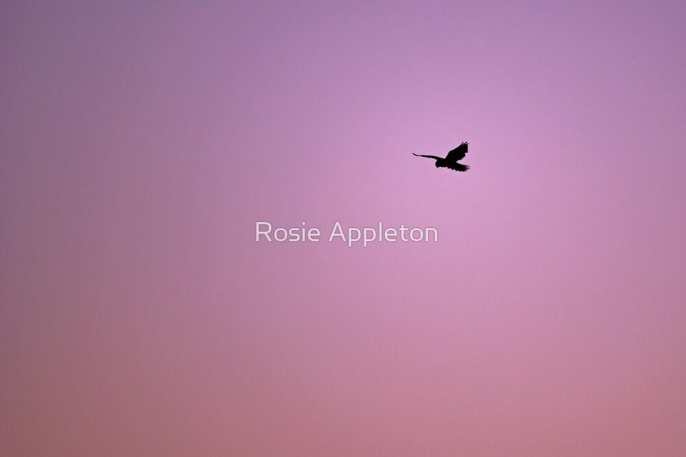 Searching by Rosie Appleton