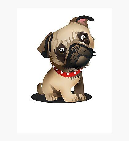 Pug pup Photographic Print