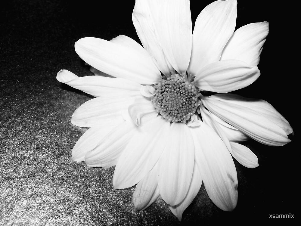 black flower 6 by xsammix