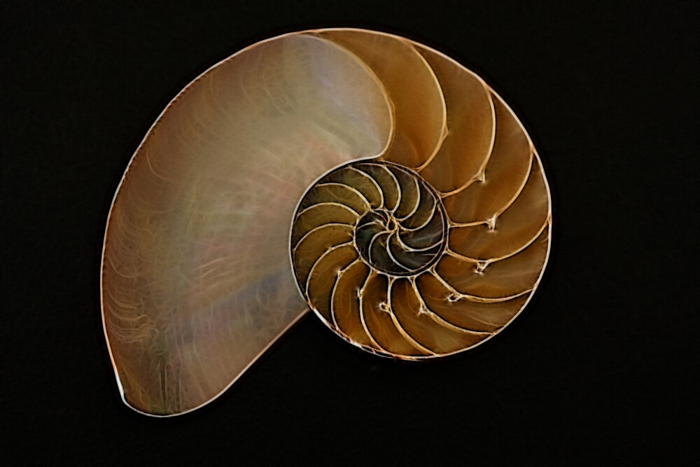 Nautilus with a hint of blue by noffi