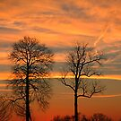 Trees. Backyard, Elkton, Maryland by fauselr