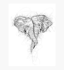 Elephant Hug Photographic Print