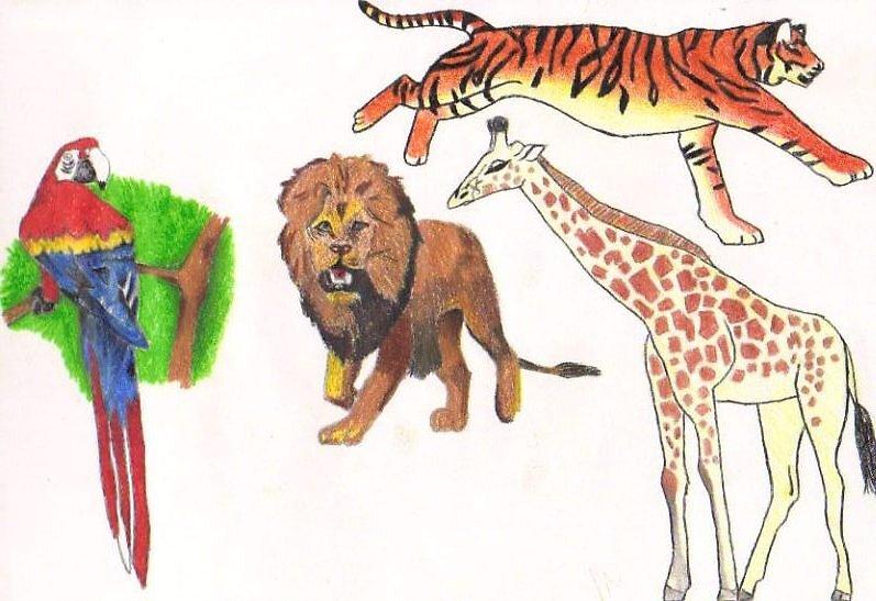 animals by xxkatiexx
