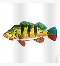 Peacock Bass Poster
