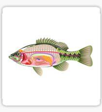 Bass Internal organs Open Fish Sticker