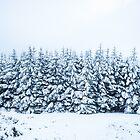 Wicklow Gap Snowy Trees  by Shay Murphy