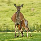 Mother and Fawn by AnnDixon
