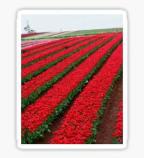 Rows and Rows of Tulips Sticker