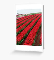 Rows and Rows of Tulips Greeting Card