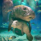Manatee by David Penfound