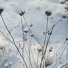 Winter decorations by Ana Belaj