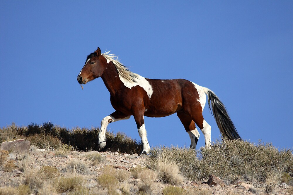 Painted Desert by Gene Praag