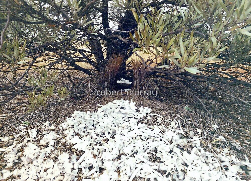 Western bowerbird's bower by robert murray