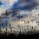 Wheat fields and a watercolour sky. by Belinda Fraser