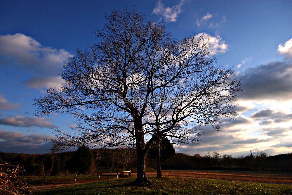 Tree in Winter by alissasanderson