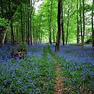 Bluebell Forest, East Sussex by Ludwig Wagner