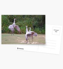 The Dance Instructor Postcards