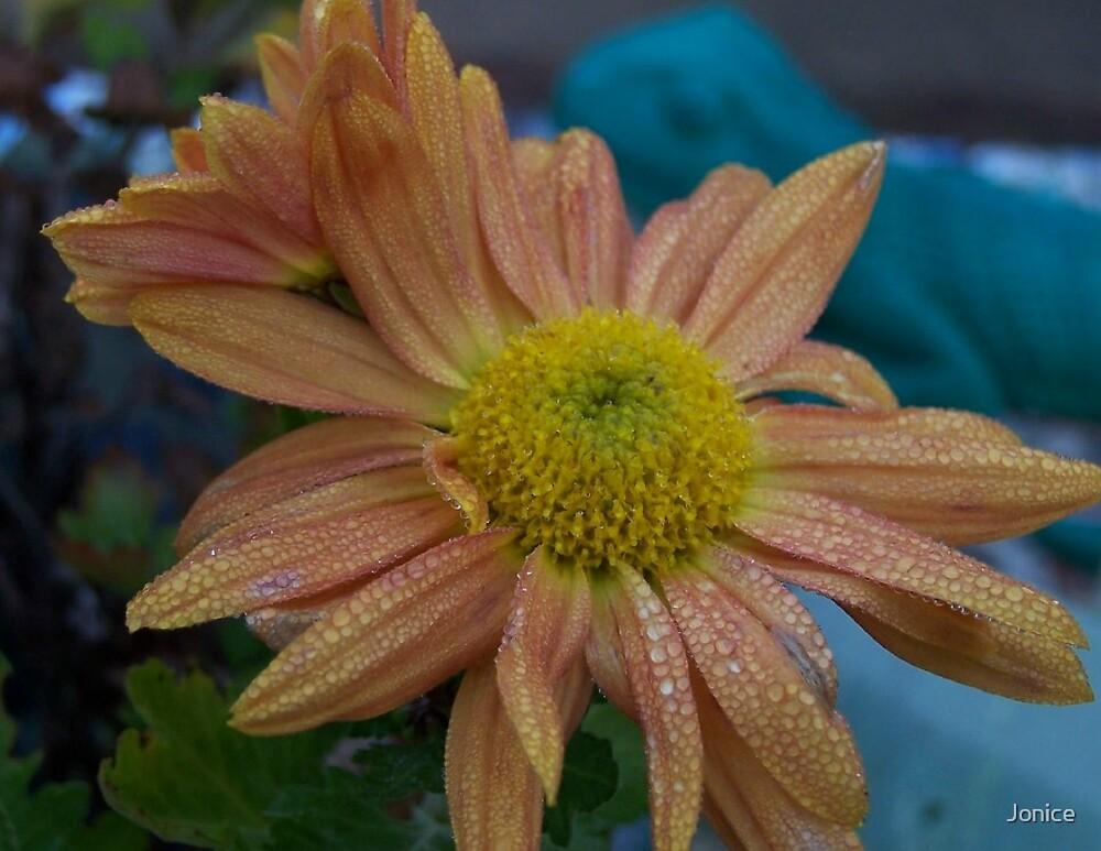 Dew Drops On The Flower by Jonice