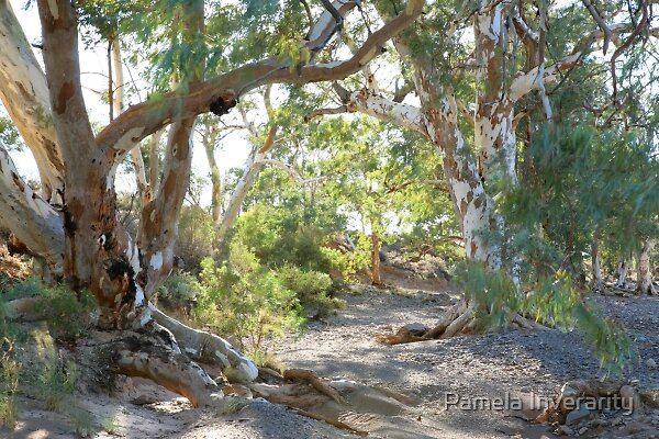 Windy Morning in Leigh's Creek by Pamela Inverarity