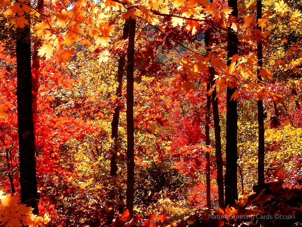 Autumn Splash by NatureGreeting Cards ©ccwri