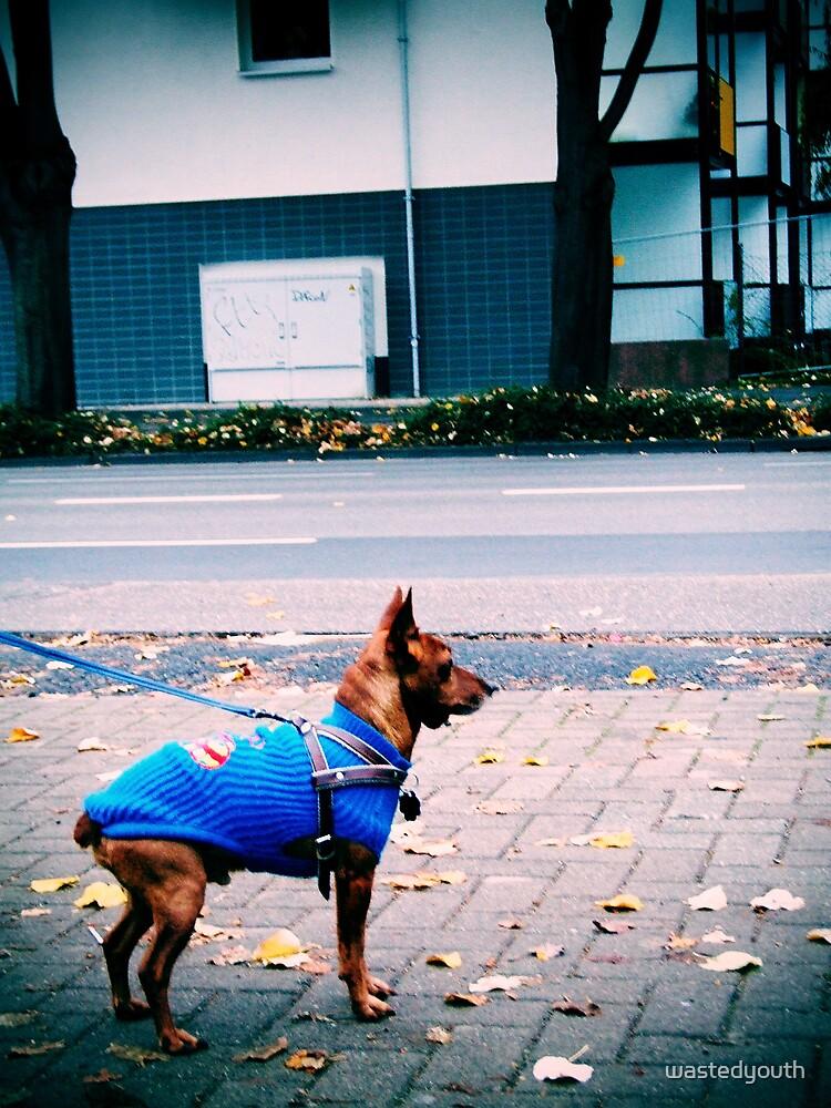 Superdog by wastedyouth