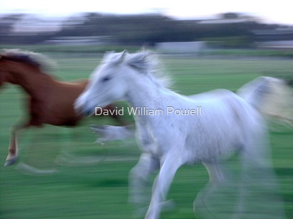 Horses - Australia by David William Powell