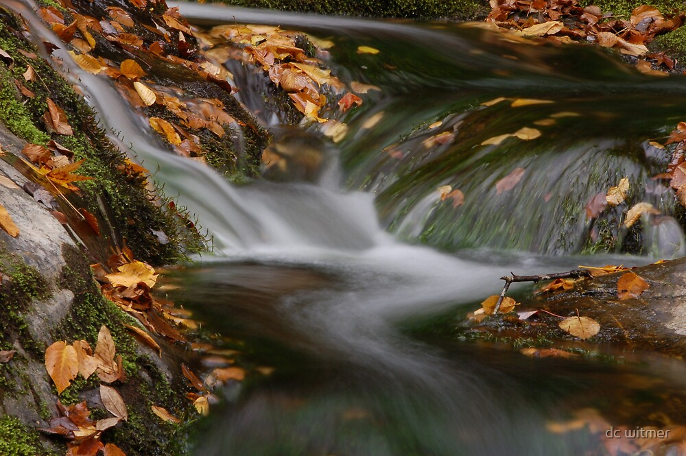 leaves in the falls by dc witmer