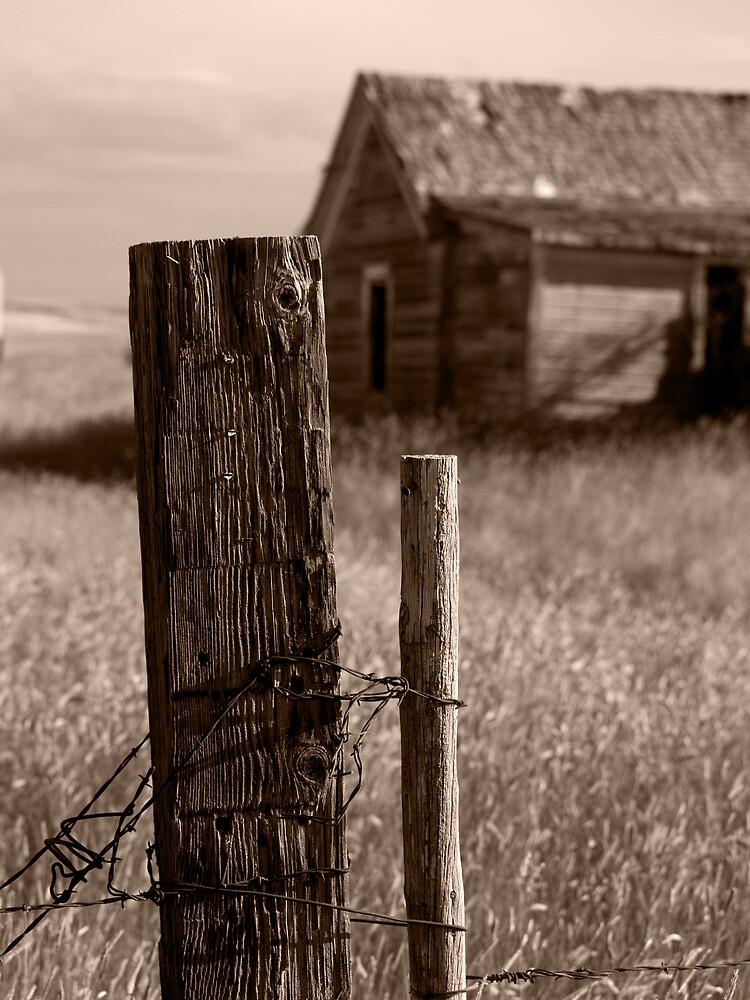 Homestead - Edgar, Montana by Tim Leonhardt