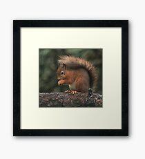 Squirrel shelter Framed Print